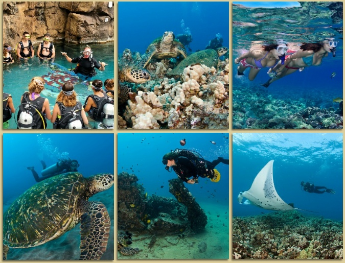Welcome to Dive Wailea Online Store